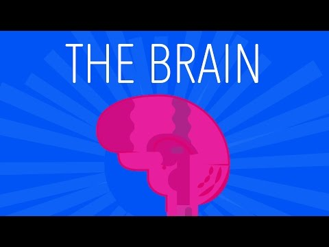 The Brain - Explained