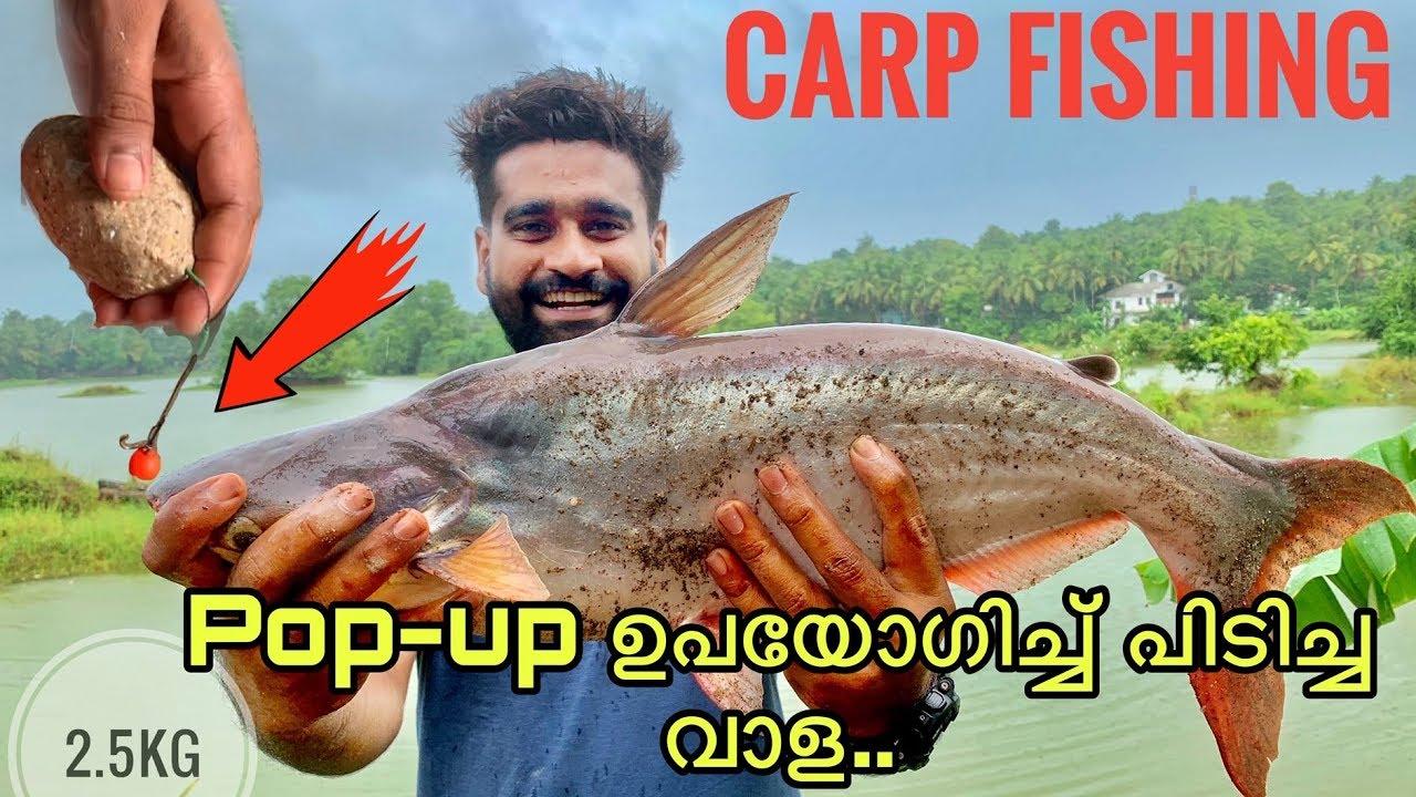 ❤️ Best pop ups for carp fishing 2019