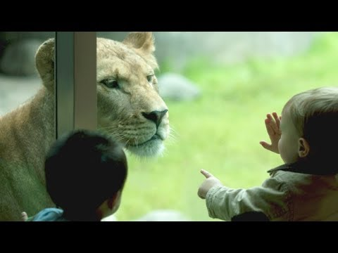 Kids + ZOO = Lots of FUNNY FAILS! - Assure yourself and don't forget to LAUGH!