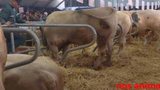 salon international de l'agriculture 2017; côté animal