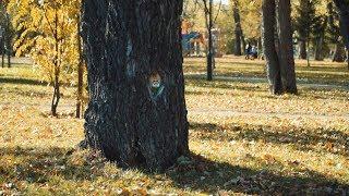 Дендрострит-арт в Комсомольском