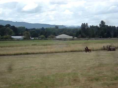 Caty gallops Colonel