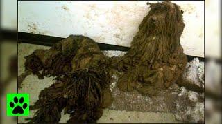 【まるでボロ布の山】全身の被毛は伸び放題で汚れが酷く絡み合っている。