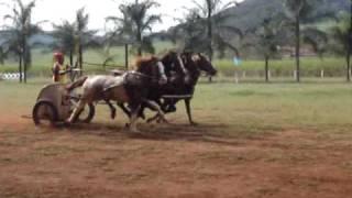 Corrida de Biga em São Simão