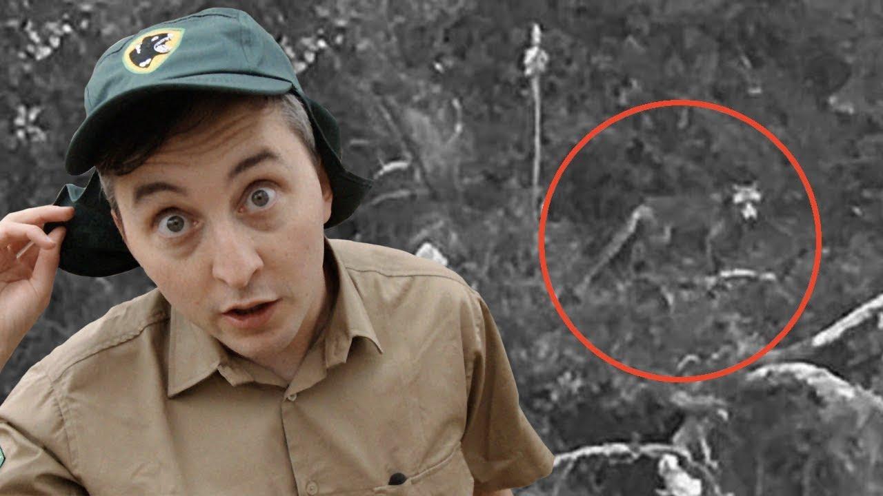Lonely Park Ranger Finds Real Tasmanian Tiger Youtube
