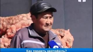 видео Картошка  Урожай и цены