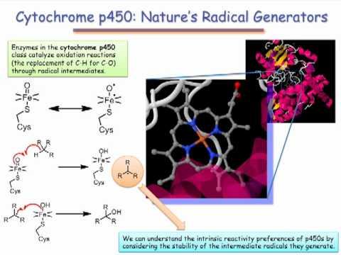 Cytochrome P450: Radicals in a Biochemical Setting