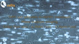 Cell-cell Adhesion with ExiGo Microfluidic Pump