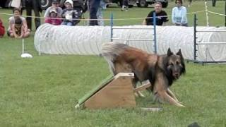 Fly Ball, Dog Agility