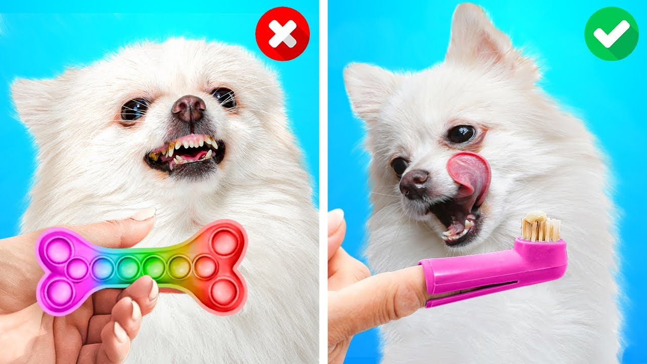 Cute And Awesome Pet Hacks You'll Be Grateful For    Clever Gadgets And DIY Crafts For Dogs And Cats