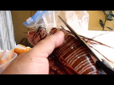 Prepare And Eat Lionfish!