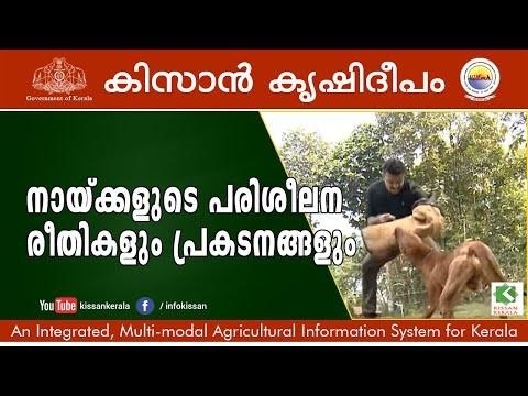 Wonders & Performances of Trained Dogs in Dog Training School, Pala