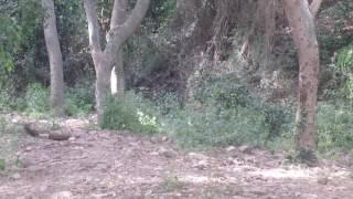 ASMR: Муравей, шаги и шепот листьев.