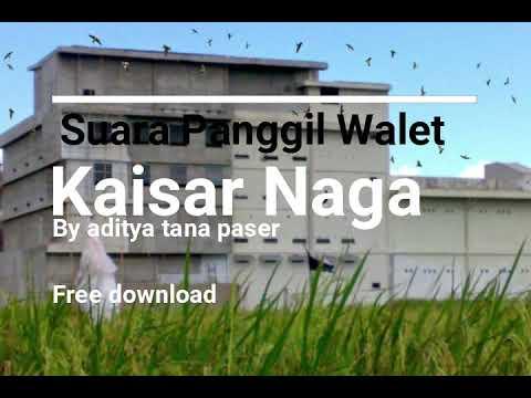 Suara Panggil Walet (Free Download)