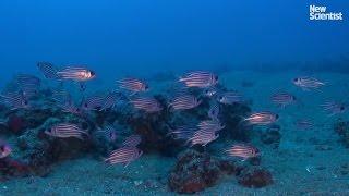 بالفيديو... كائنات بحرية غير مألوفة في المياه اللبنانية