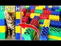 GIANT LEGO MAZE for CAT KITTENS! Can they EXIT? 🐈