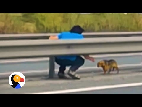Abandoned Dog Rescued From Highway | The Dodo