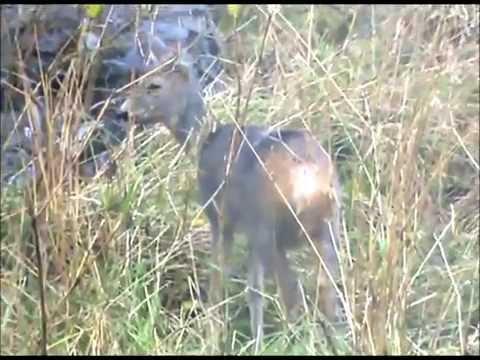"""rodbergMband with  a guest star..a deer--- """" wet deer blues"""""""