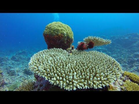 Plongées à Wallis-et-Futuna