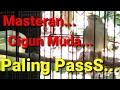 Terapi Suara Masteran Cigun Muda Lepas Loloh Belajar Ngebren Ak   Mp3 - Mp4 Download