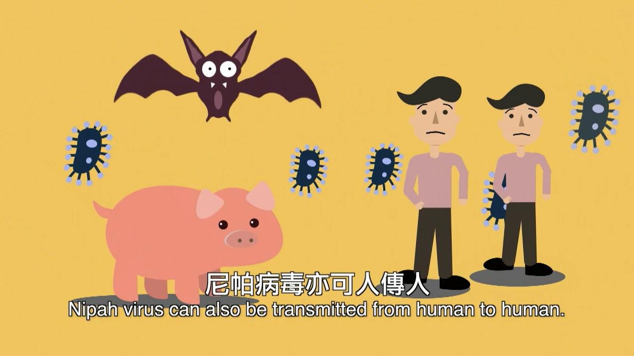 尼帕病毒傳播途徑 Transmission paths of Nipah virus - YouTube