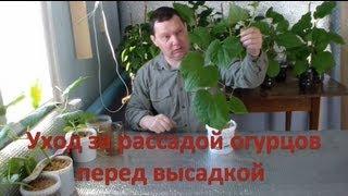Уход за рассадой огурцов перед высадкой(, 2013-05-03T19:59:12.000Z)