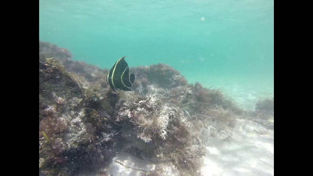 Caribbean underwater [Guadeloupe - Marie-Galante]
