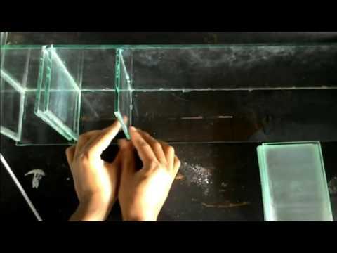How To Make Aqurium Betta Fish Cool In Indonesia