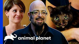 Baby Food Helps Build Traumatized Cat's Confidence | My Cat From Hell