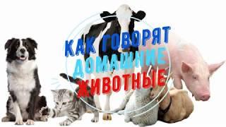Голоса домашних животных Видео для детей Как животные говорят