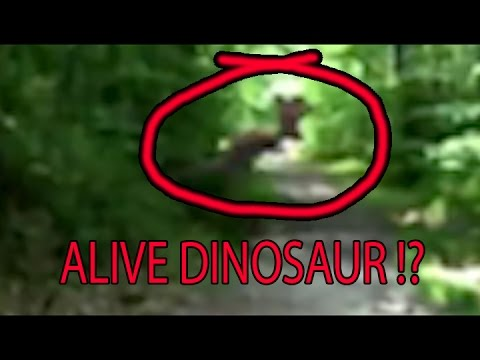Alive Dinosaur Footage Zoomed and in Slow Motion. Are ...