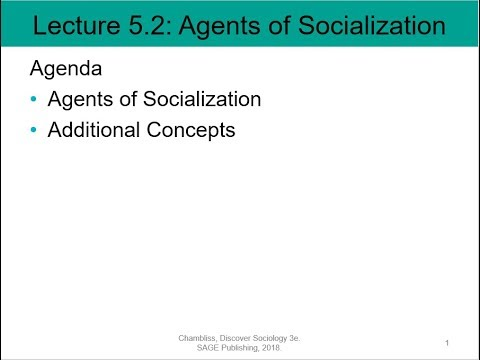 which of the following is not an agency of socialization