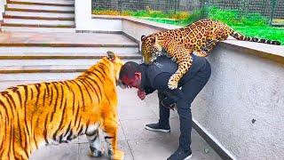 Unbelievable Friendship Between Humans and Wild Animals