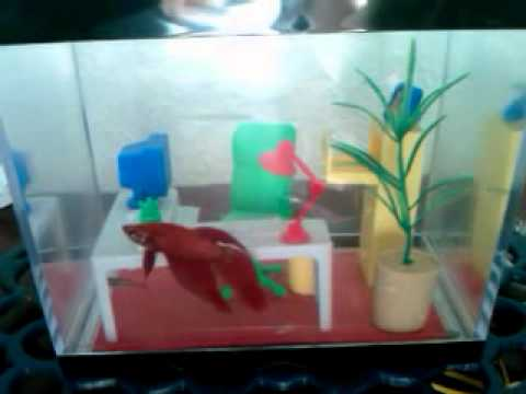 Office Fish Tank YouTube