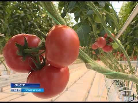 Экоферма «Кушкульские теплицы» приглашает на работу агрономов разных специализаций