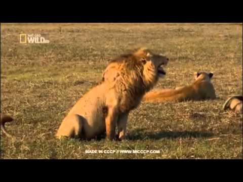 Luis solarte - las risas de un león