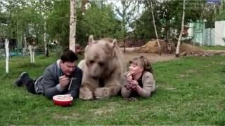 ПОДБОРКА ПРИКОЛОВ #27 / best fails compilation - Медведь, водка, балалайка