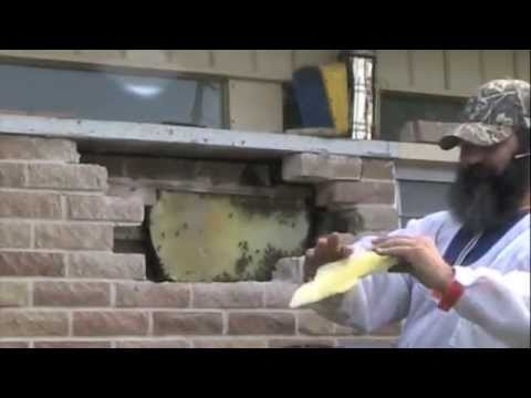 Honey Bees Removed From A Double Brick Wall