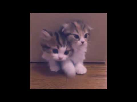 Funny cats playing with friends - Compilation cute cats