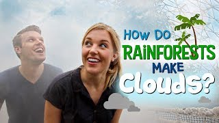 How Do Rainforests Make Clouds? | Maddie Moate