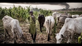 RUGA Why Nigerians MUST DEFEND Their Lives & Lands