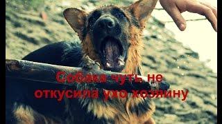 Собака чуть не откусила ухо хозяину
