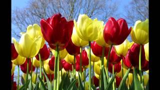 Ботаника. Цветковые. Класс Однодольные