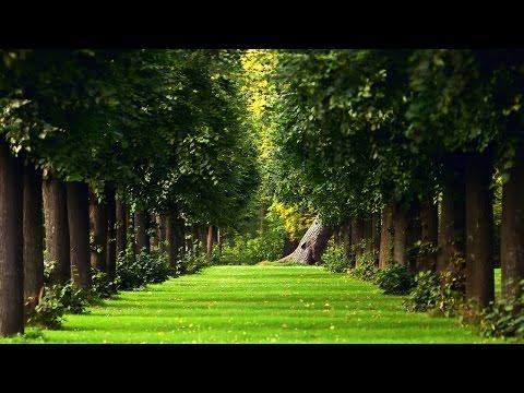 Самые необычные и красивые деревья