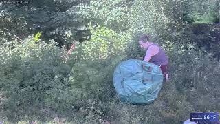Preview of stream Backyard Bird and Squirrel Camera