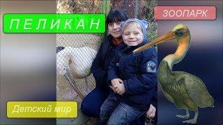 Пеликан ЗООПАРК Детский Мир