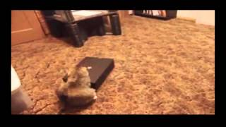 Funny Animal Videos Funniest Videos In The World Funny Fail 2014 Funny Pranks