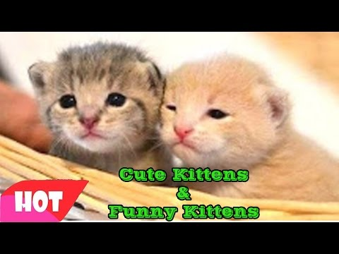 Kittens Cute, adorable -  orphaned kittens, kittens abandoned by his mother -  funny kittens #1