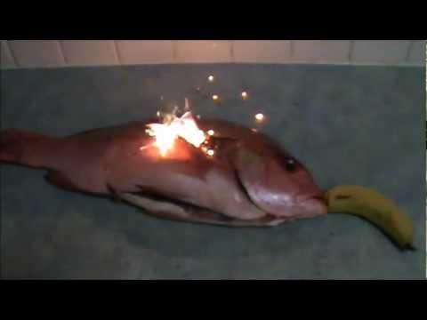 как правильно приготовить лосось