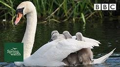 Our spring wildlife webcams live! 🐤🦊🐿 - Fri 5 June - Springwatch - BBC